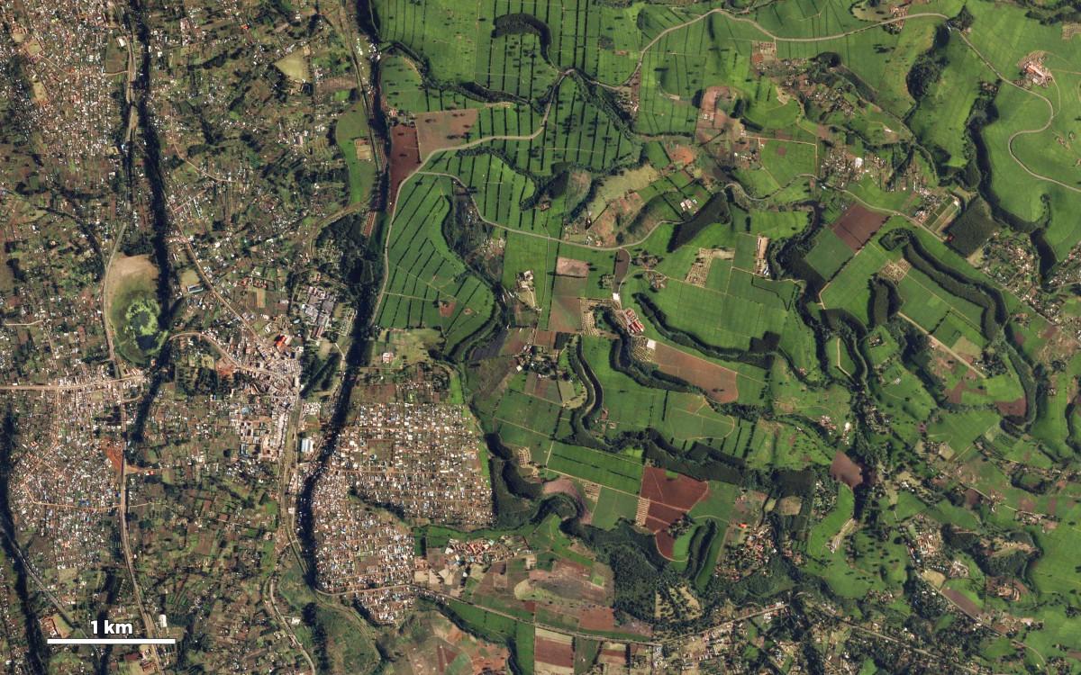 kenya-smallholders